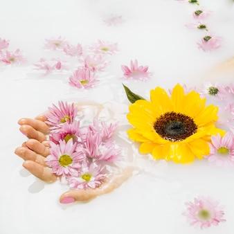 Zakończenie kobiety ręki mienia kolor żółty i menchia kwitnie na ciekłym tle
