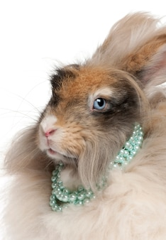 Zakończenie angielski angorski królik jest ubranym perły przed białym tłem