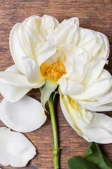 Zakończenie białej róży płatki na stole