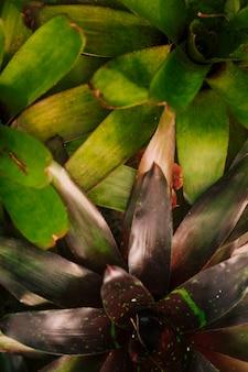 Zakończenie bromeliad roślina w ogródzie