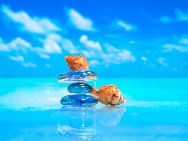 Zakończenie denna skorupa na plaży. sterta otoczaków kamienie i plumeria przy plażą na drewnianej powierzchni. koncepcja zen, spa, lato, plaża, morze.