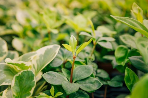Zakończenie dorośnięcie rośliny z świeżymi liśćmi