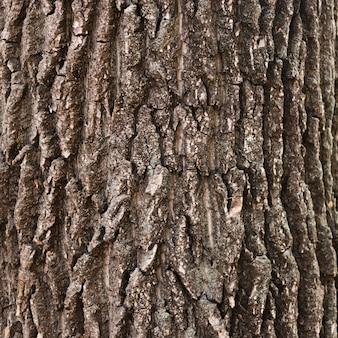 Zakończenie drewniana drzewnego bagażnika tekstura