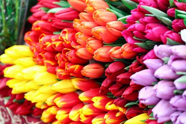 Zakończenie duży bukiet stubarwni tulipany. jasne i słoneczne zdjęcie. wiązka wiosennych świeżych kwiatów. międzynarodowy dzień kobiet i koncepcja luksusowych prezentów