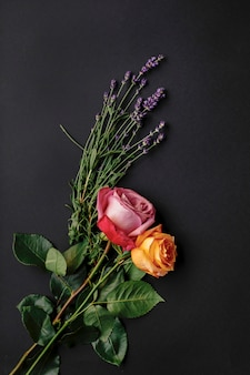 Zakończenie dwa kolorowej róży nad czarnym tłem