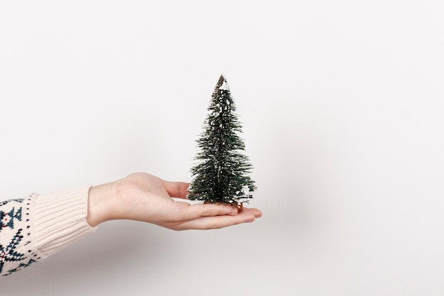 Zakończenie dziewczyna trzyma jedlinowego drzewa z białym tłem