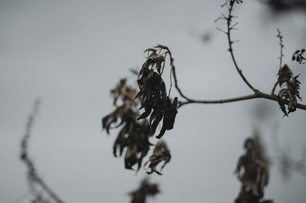 Zakończenie gałąź z wysuszonymi spadków liśćmi