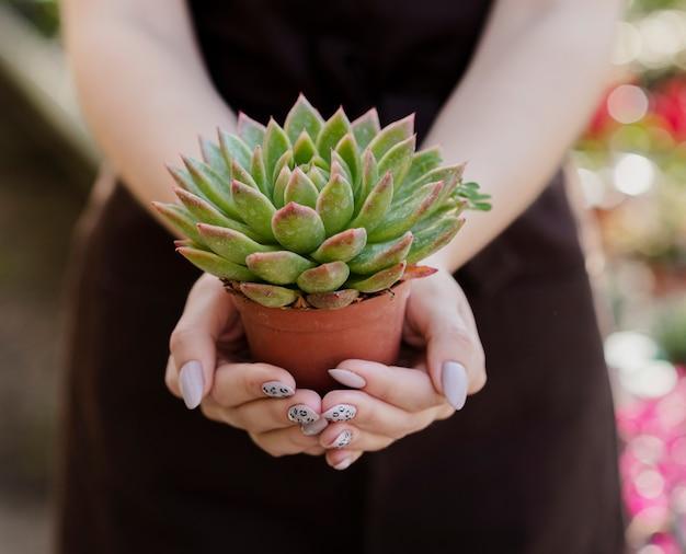 Zakończenie kobieta trzyma małego roślina garnek