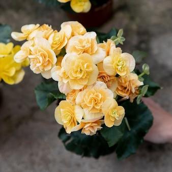 Zakończenie kobieta z pięknymi żółtymi kwiatami