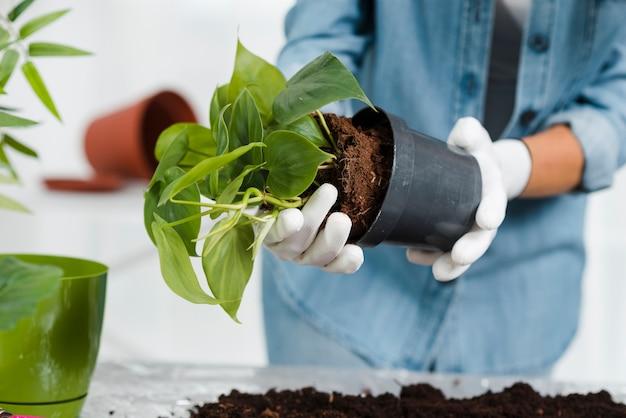 Zakończenie kobiety sadzenia kwiaty