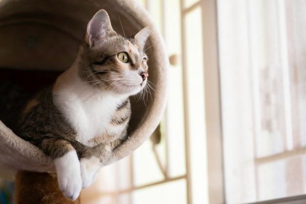 Zakończenie kota obsiadanie na kota drzewie