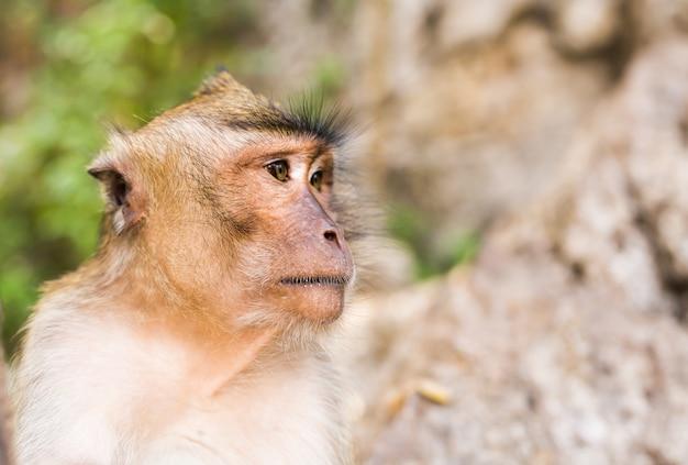 Zakończenie małpia twarz w natury tle.