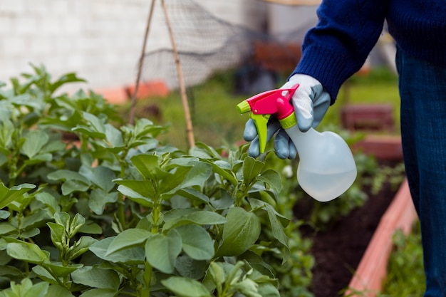 Zakończenie mężczyzna opryskiwania rośliny w ogródzie