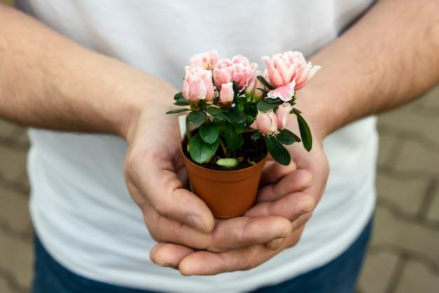 Zakończenie mężczyzna trzyma małej dom rośliny