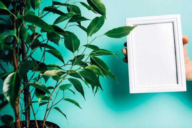 Zakończenie osoby ręka trzyma białą puste miejsce ramę blisko doniczkowej rośliny
