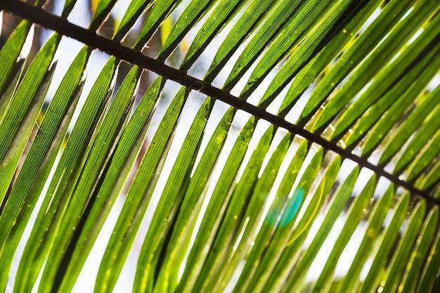 Zakończenie palmowy liść na abstrakcjonistycznym tle