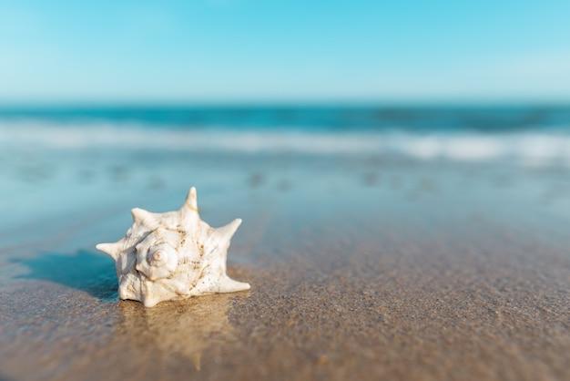 Zakończenie piękna skorupa na tropikalnej plaży. skopiuj miejsce. podróże i letnie tła. czas letni