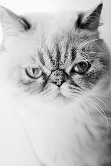 Zakończenie portret kot