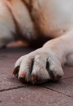 Zakończenie psia noga.