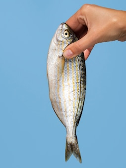 Zakończenie ręka trzyma świeżej ryba