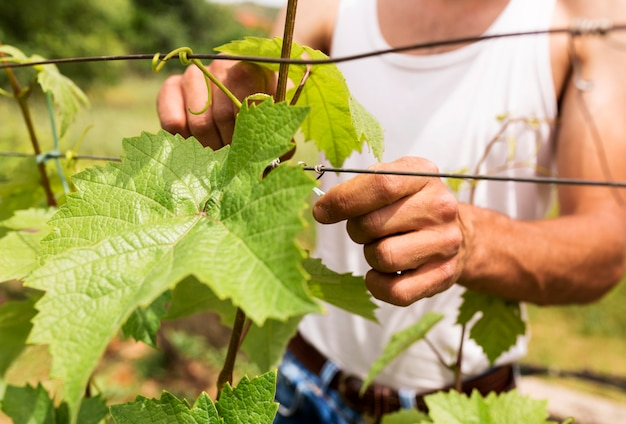 Zakończenie rolnik pracuje przy winoroślą