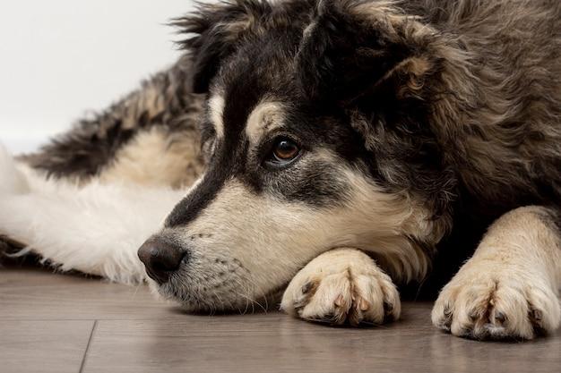 Zakończenie śliczny psi obsiadanie na podłoga