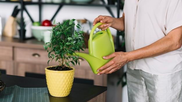 Zakończenie starsza kobieta nawadnia doniczkowej rośliny na kuchennym kontuarze