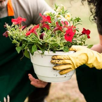 Zakończenie starsza para z kwiatu garnkiem
