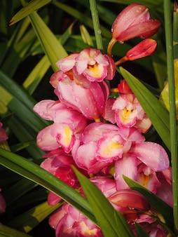 Zakończenie strzału bukiet świeża i naturalna kolorowa tropikalna orchidei wybiórki ostrości płytka głębia pole