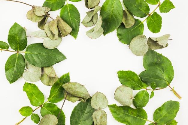 Zakończenie susi i świezi liście na białym tle