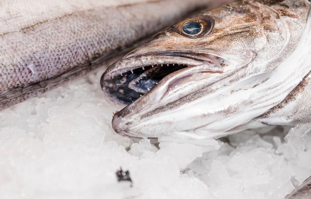 Zakończenie świeża ryba kłaść na lodzie
