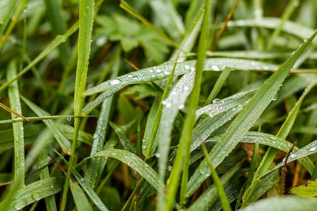Zakończenie szczegółu wizerunek trawa z wodnymi kroplami