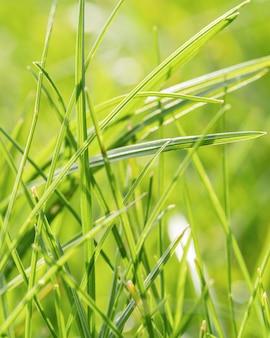 Zakończenie trawa pozostawia na zewnątrz