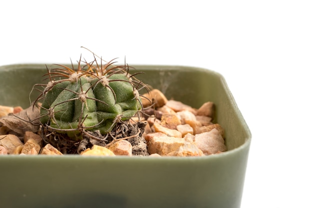 Zakończenie up mały kaktus w flowerpot na białym tle