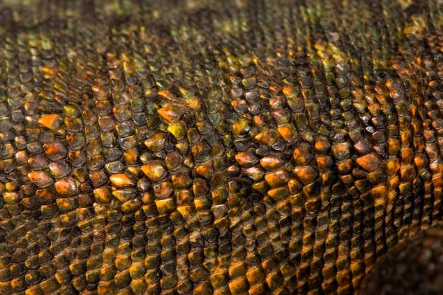 Zakończenie uromastyx waży tekstury tło
