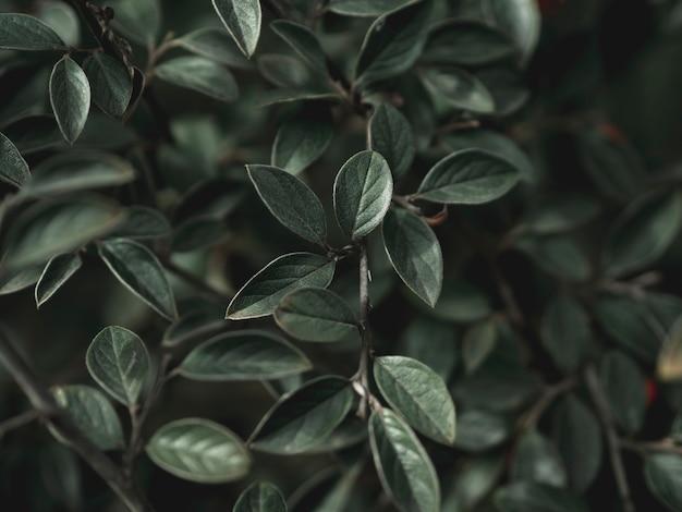 Zakończenie widok zielony liścia pojęcie