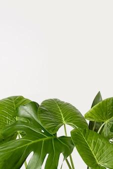 Zakończenie zieleni liście z kopii przestrzenią