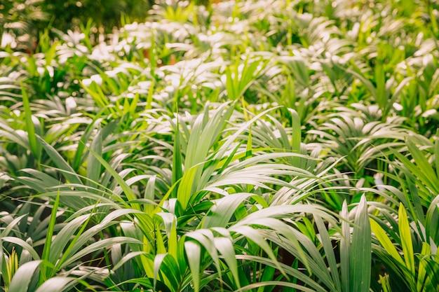 Zakończenie zielone rośliny w ogródzie
