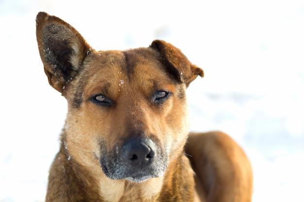 Zakończenie żółtego psa zwierzę domowe na białym śniegu outdoors
