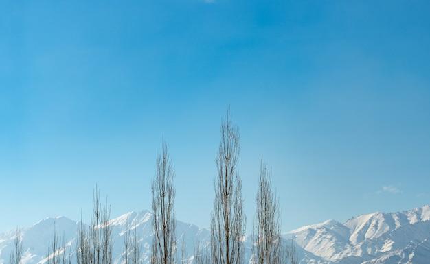 Zakres himalajów z jasnym błękitnym niebem i cieniem oraz ramką drzewa