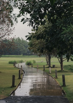 Zakrzywiona ścieżka w zielonym parku w deszczowy dzień