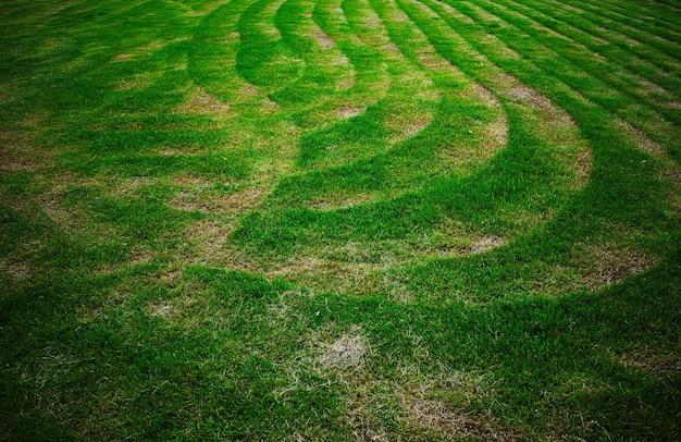 Zakrzywione ślady trymera po ścięciu trawy w ogrodzie