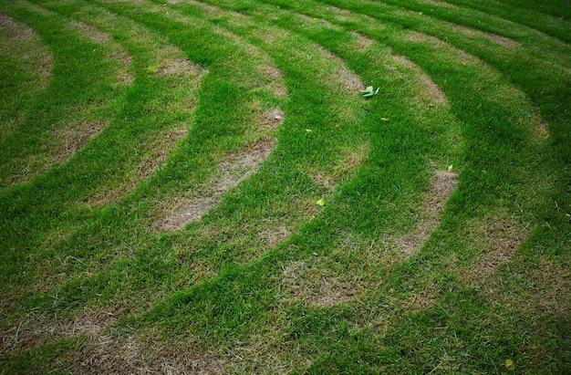 Zakrzywione ślady trymera po skoszeniu trawy