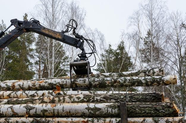 """Załadunek kłód brzozowych na pojazdy specjalne. świeżo posiekana brzoza. zbiór drewna w zimie. przemysł drzewny. podpis: """"strefa niebezpieczna 20 m. nie stawaj pod ładunkiem"""""""