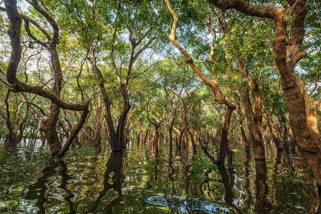 Zalane drzewa w lasach tropikalnych namorzynowych