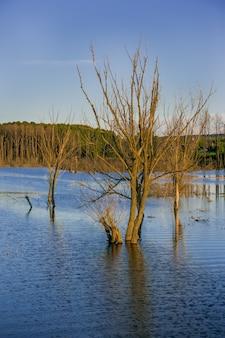 Zalane martwe drzewa. drzewa w rzece. zaburzona ekologia