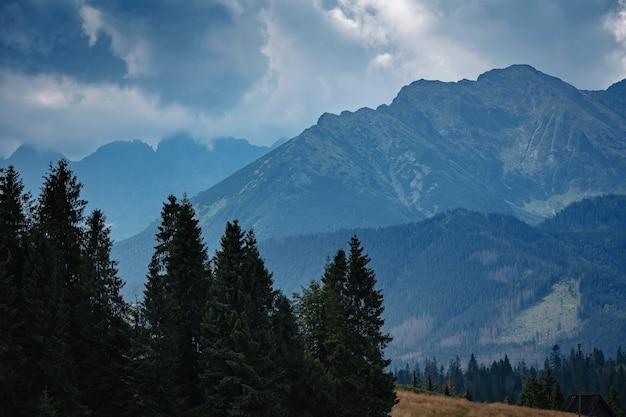 Zalesione zbocze górskie w nisko położonej chmurze z wiecznie zielonymi drzewami iglastymi spowitymi mgłą w malowniczym widoku krajobrazu