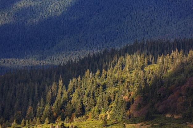 Zalesione zbocze góry w karpatach