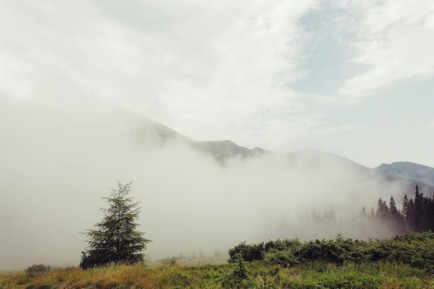 Zalesione zbocze góry w nisko położonej chmurze z wiecznie zielonymi drzewami iglastymi spowitymi mgłą w malowniczym widoku krajobrazu