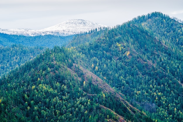 Zalesione zbocze z ośnieżonym szczytem rosja góry ałtaj